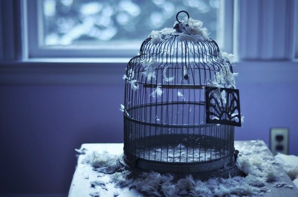 Favim.com-beautiful-bird-cage-free-freedom-430186