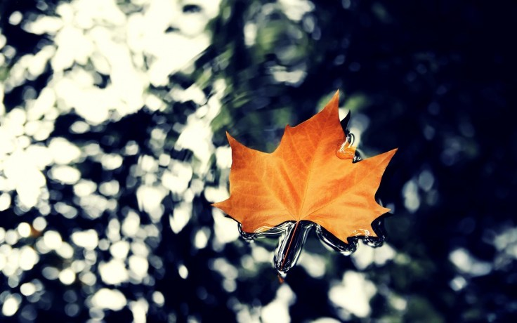 water-dry-leaves-autumn-wallpapers